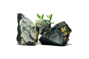 Tree Agate: The Ultimate Guide to Meaning, Properties, Uses